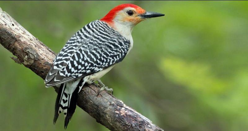 A Bird You May See at OJT