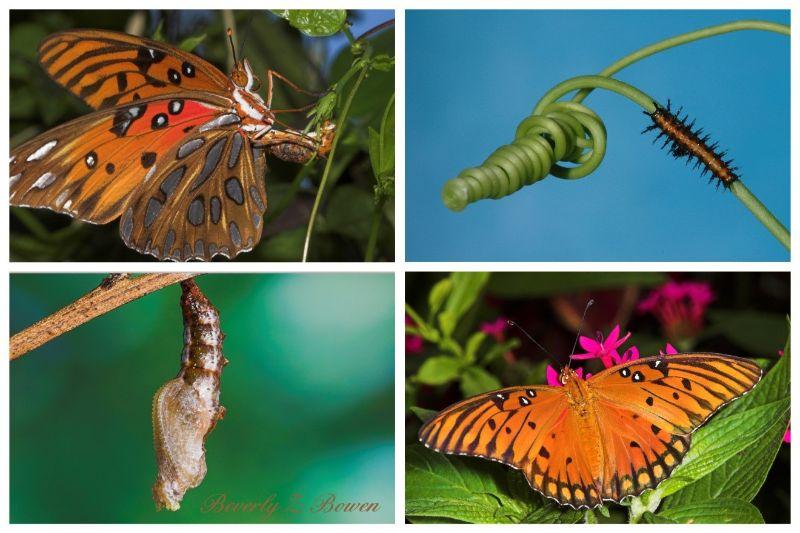 Butterflies from Beverly Bowen