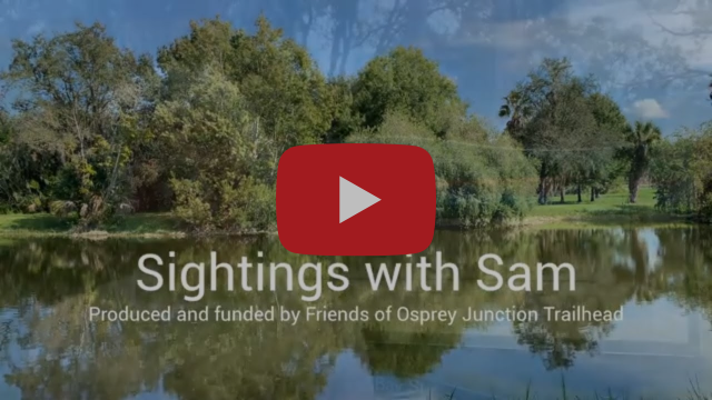 """Sightings with Sam"" Videos"